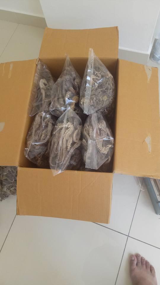 Seahorse for sale, seahorse for sale dubai, seahorse fish for sale, seahorse fossil for sale, wild seahorse for sale, dry seahorse for sale, dried seahorse for sale philippines, dried seahorse for sale australia, dried seahorse for sale uk, dry seahorse prices, dried seahorse buy