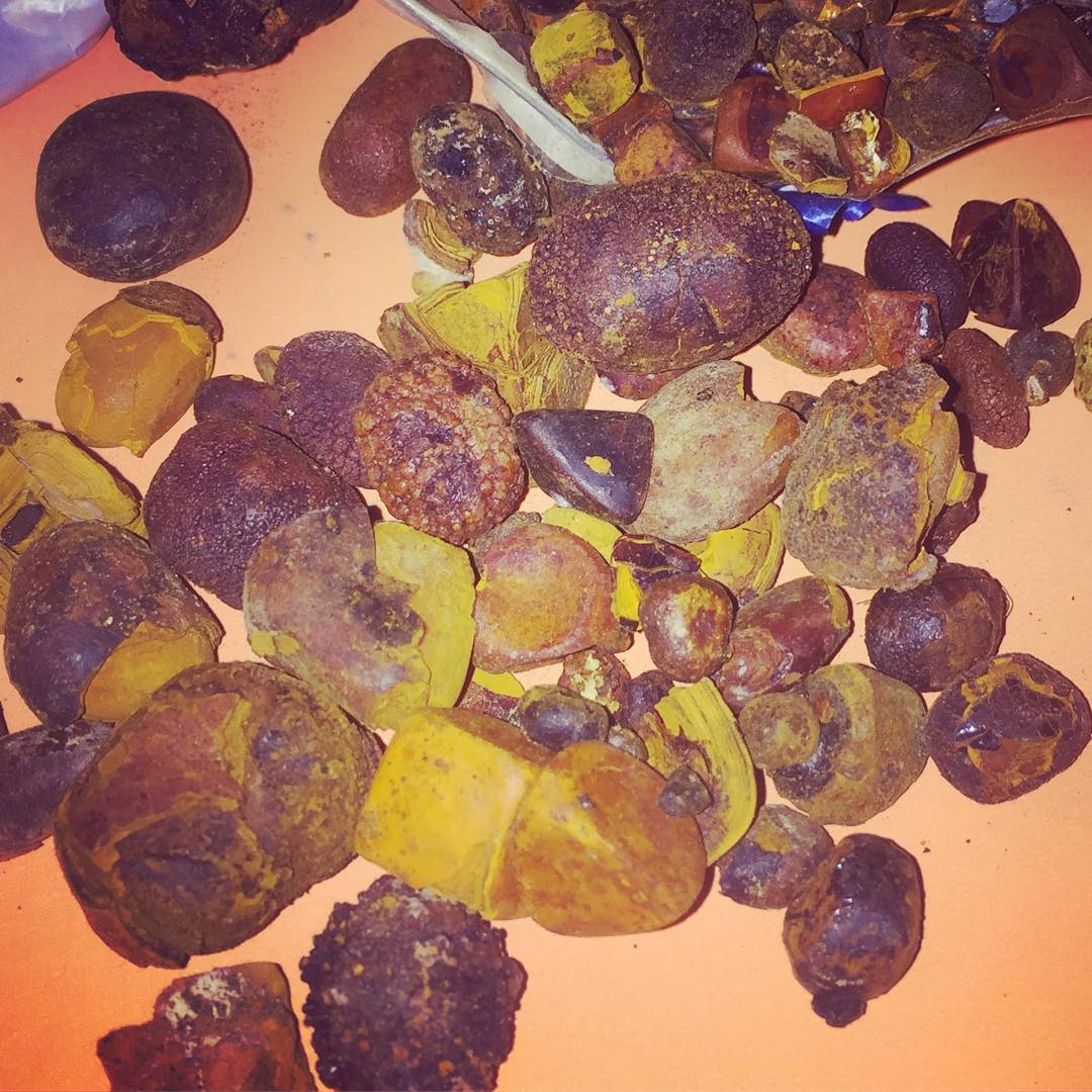 Gallstones for sale, Cow Gallstones for sale, Ox gallstones for sale