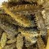 sea cucumber for sale, sea cucumber for sale philippines, sea cucumber for sale uk, sea cucumber for sale malaysia, sea cucumber for sale brisbane, sea cucumber for sale usa,sea cucumber for sale canada, california sea cucumber permits for sale, dried sea cucumber for sale philippines, sea cucumber for extract buy, sea cucumber food for sale, live sea cucumber for sale, live sea cucumber for sale uk, sea cucumber on sale, sea cucumber powder for sale, sea cucumber to buy, sea cucumber wholesale