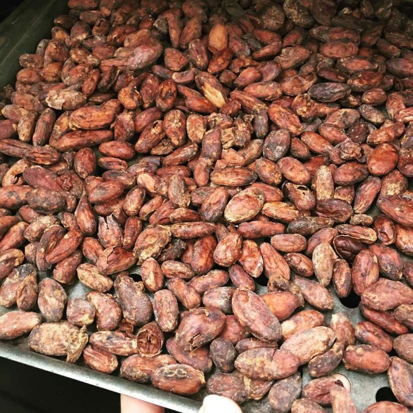 Cocoa beans for sale,Cocoa beans for sale near me, cocoa beans for sale australia, cocoa beans for sale uk, cocoa beans for sale and export,cocoa beans for sale usa, cocoa beans buy australia, fresh cocoa beans for sale, cocoa bean farm for sale, cocoa bean buy in india, cocoa beans buy online, cocoa beans buy online india, organic cocoa beans for sale, raw cocoa beans for sale, cocoa beans to buy,