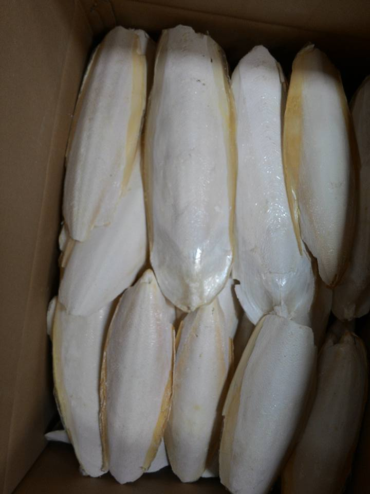 Dried Cuttlefish bones | Buy dried cuttlefish bones online | Cuttlefish bones for sale