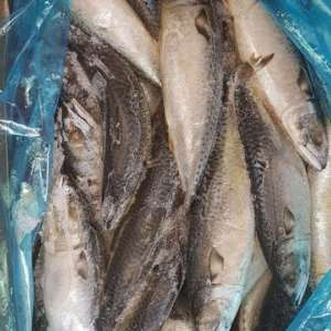 Herring fish | Dried herring fish for sale
