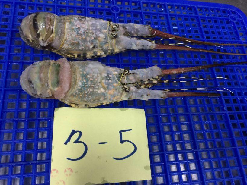 Frozen lobster tails | Buy Frozen lobster | Frozen lobster tail wholesales