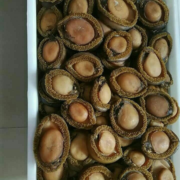 Dried Abalone for sale| Buy dried abalone online | Red abalone price